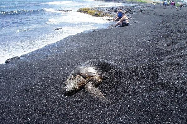 검은 모래가 독특, 빅 아일랜드의 해변