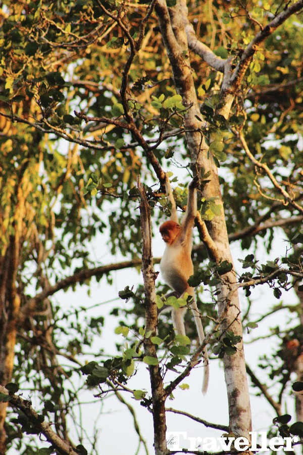 코타키나발루 정글에서 보낸 크리스마스