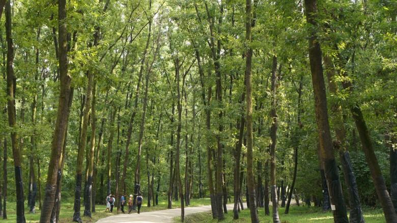 12 융건릉 산책로