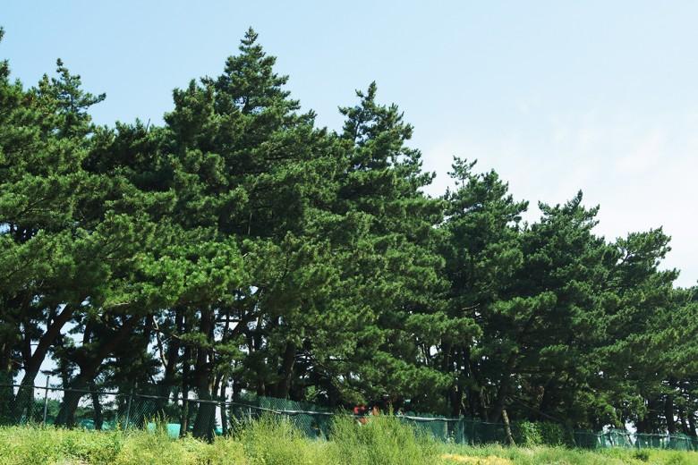 화성_궁평리 해송숲_GA유미선(4)-72