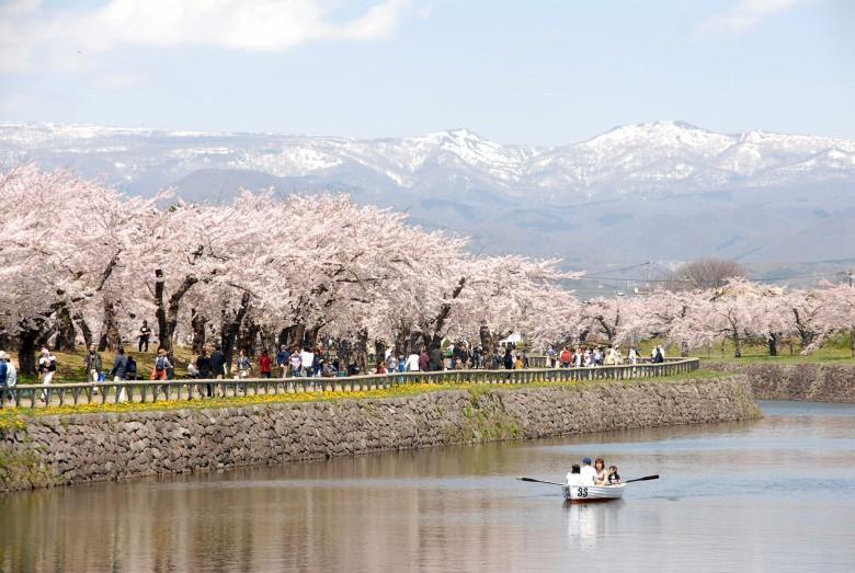 일본벚꽃기행-북해도