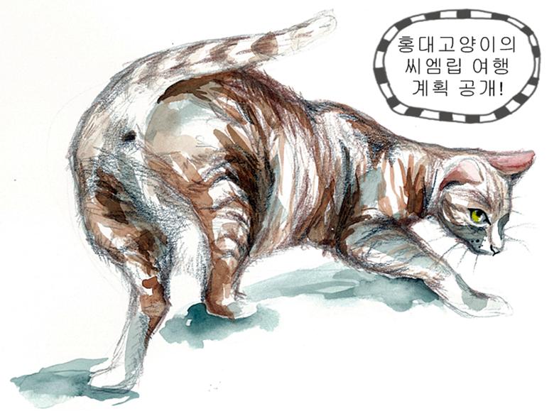 홍대고양이의 씨엠립 여행 계획