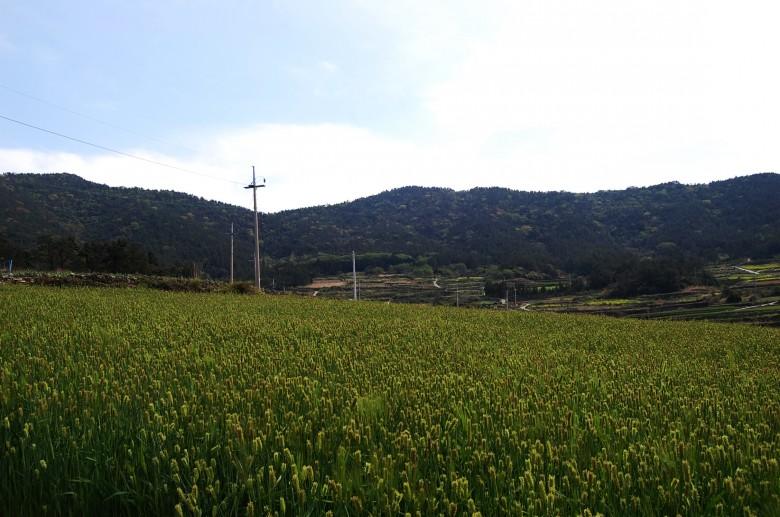 청산도슬로우걷기축제_상서마을 (27)