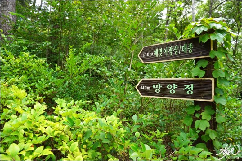 국내여름휴가 울진(수정) (25)