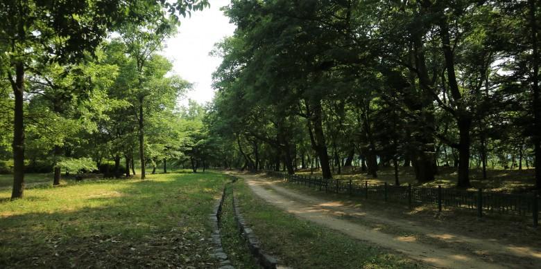 의성 사촌리가로숲_이유미