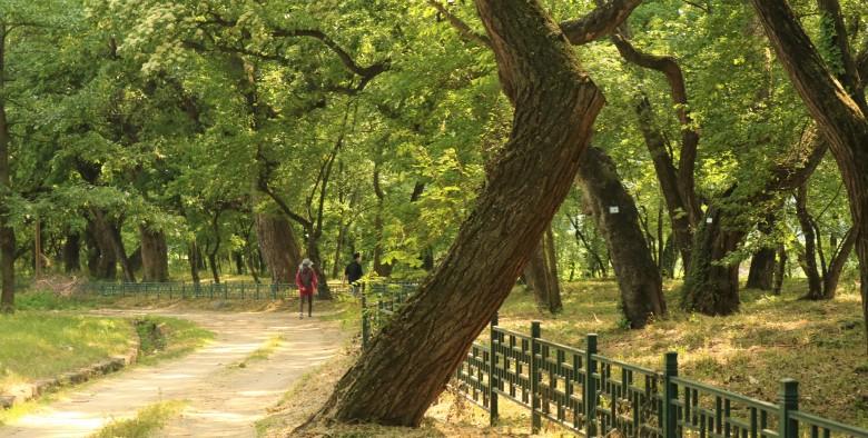 의성 사촌리가로숲_이유미5