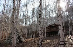하얀 신비의 숲, 인제 자작나무숲