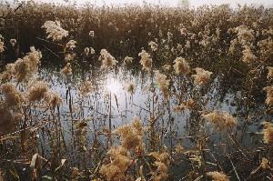 안산의 가을을 느끼다