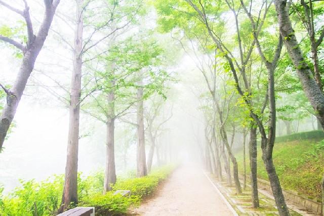 기묘한 풍경 속 경상북도 수목원