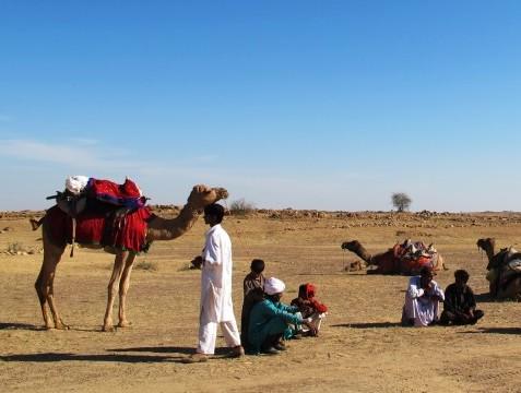 인도, 낙타를 타고 황금빛 사막을 건너다