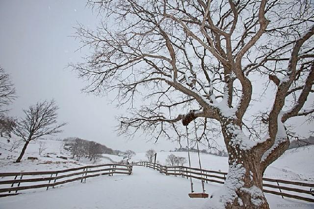 흰눈이 소복소복, 양떼목장의 겨울풍경