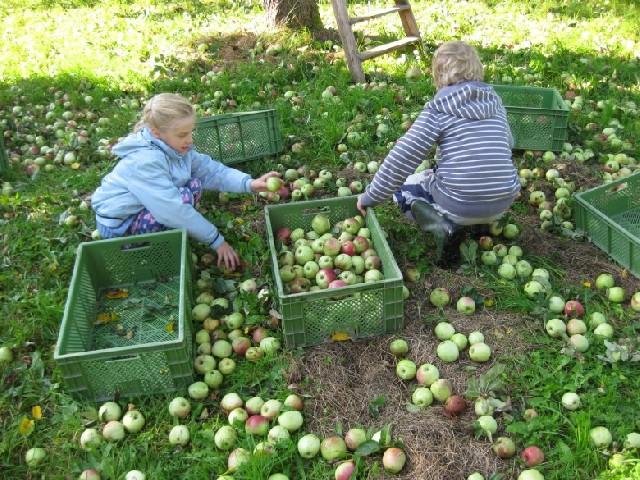 독일 농촌체험기(wwoof), 사과주스를 만들어보아요!