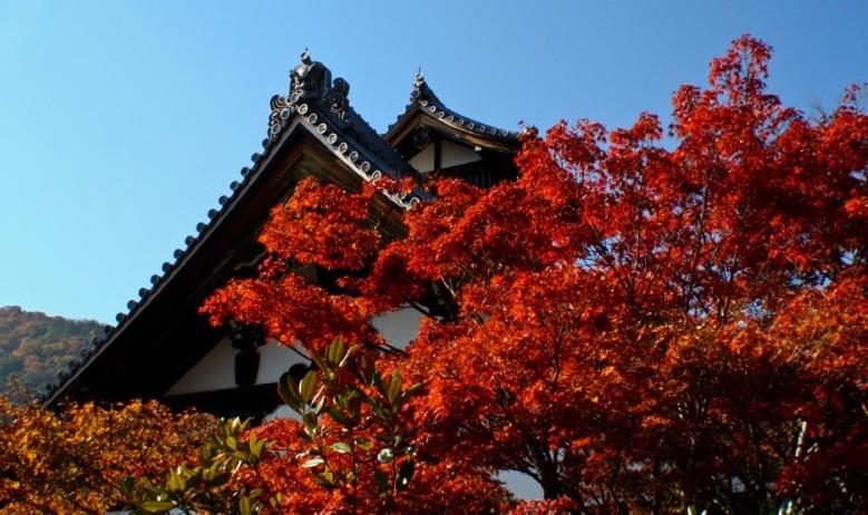 가을빛 가득한, 교토 아라시야마 여행