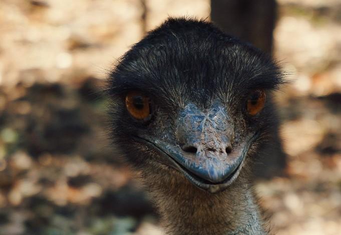 동물의 왕국, 호주 캥거루 섬으로 떠나는 모험
