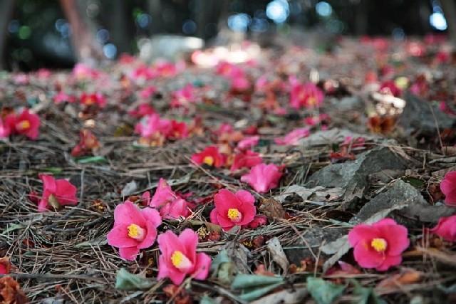 거제 비밀의 숲, 봄 맞으러 떠난 산책