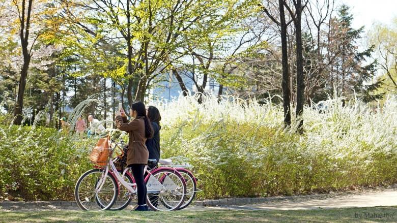 나를 유혹하는 봄섬의 향기, 선유도 벚꽃놀이