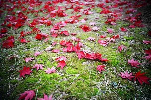 서울, 가을로 물들다.