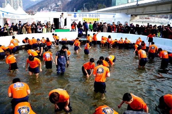 2013 얼음나라 화천 산천어축제, 클로즈업!
