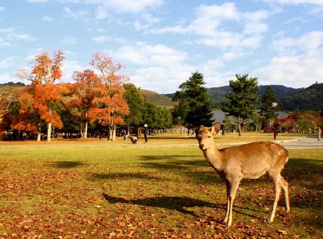 가을이 물드는 도시, 나라를 여행하다