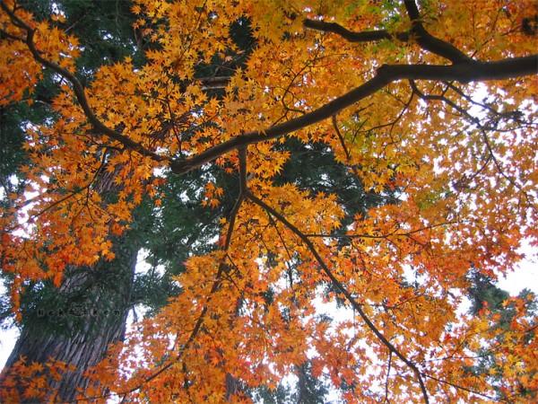 일본 단풍여행 #4 –가을에 물든 절경, 야마데라(山寺)