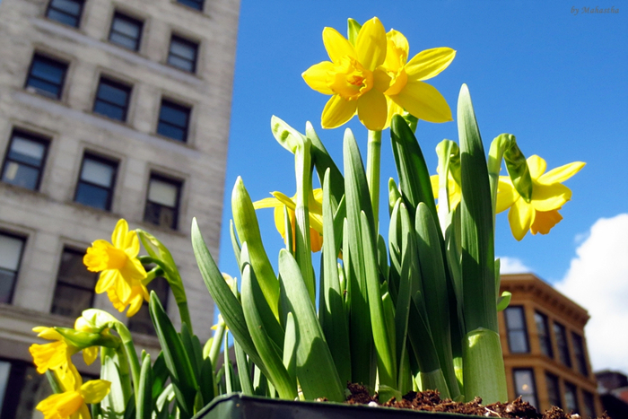 봄을 사러 뉴욕 유니온 스퀘어로 간다!