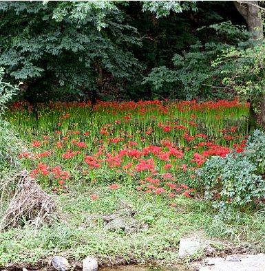가을여행, 선운사 꽃무릇을 찾아