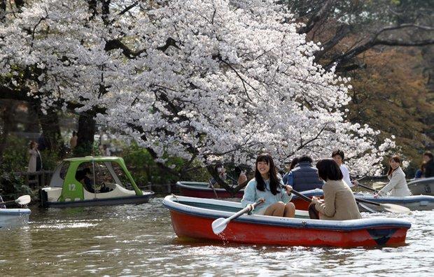봄날의 신선놀음! 도쿄 이노카시라 공원의 뱃놀이