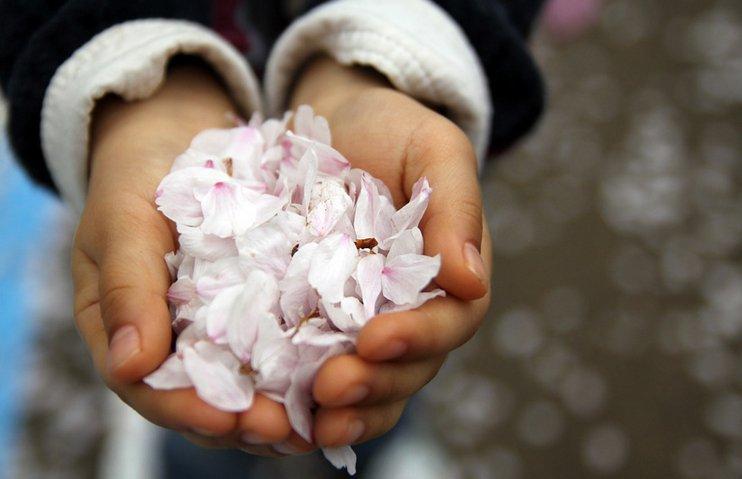 우에노 공원 벚꽃 엔딩, 당신을 사랑합니다