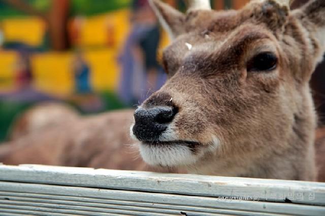 동물원 속 미술관, 대구 허브힐즈 쥬쥬랜드