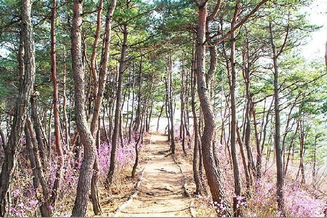 봄날의 힐링, 마곡사 솔바람길을 걷다.