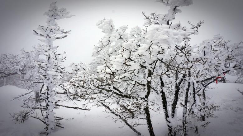 아직 겨울, 한라산의 영실탐방로에 오르다