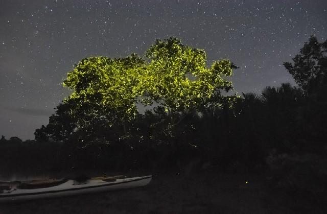 몽환의 숲으로 당신을 초대합니다, 보홀 반딧불 투어