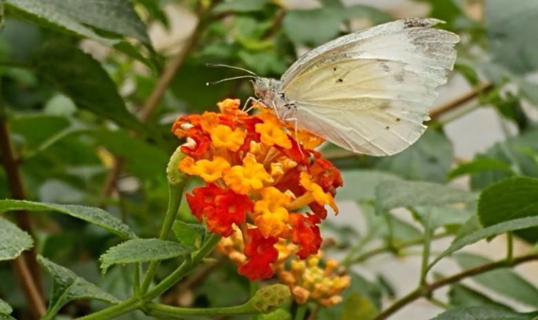 봄나들이 하기에 제격! 구리시 곤충생태관