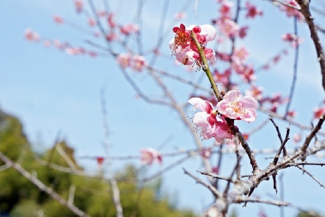 봄향기 따라 떠난 다케오 시, 봄빛 명소 Best 4