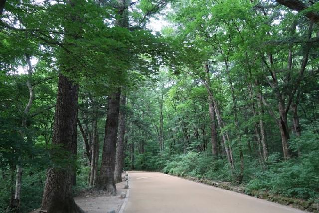 우리나라 3대 전나무 숲, 월정사 숲길을 걷다