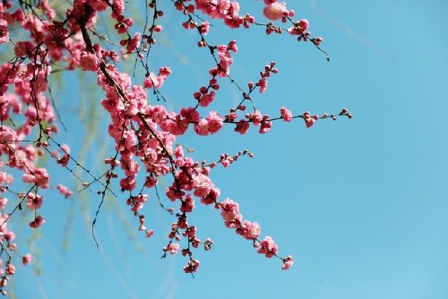하얼빈 유학일기, 겨울 도시 하얼빈에 찾아온 봄