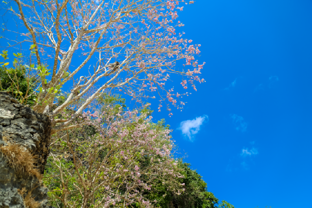 신들의 섬, 인도네시아 발리의 자연을 만나는 법