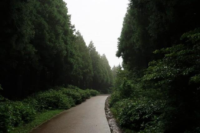 신성한 숲으로 가요, 사려니숲길