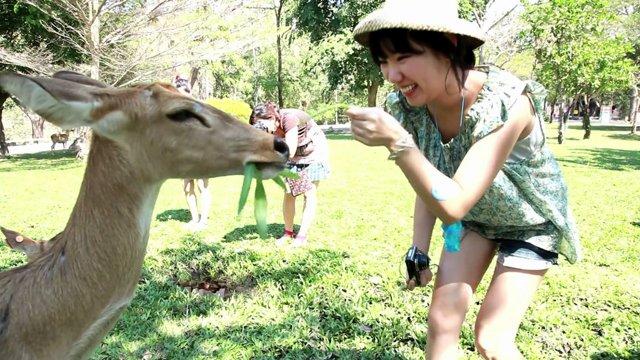 카오키여우 동물원