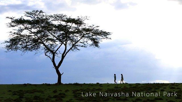 케냐 나이바샤호 국립공원