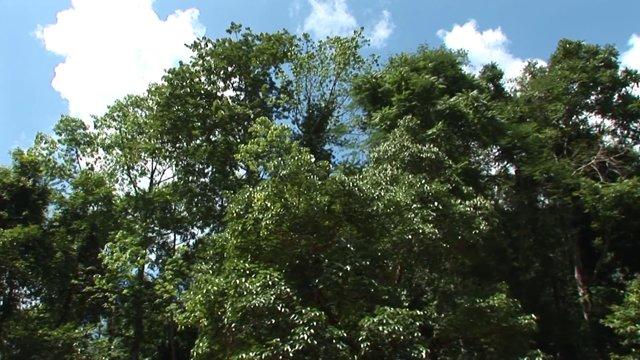 대나무 뗏목
