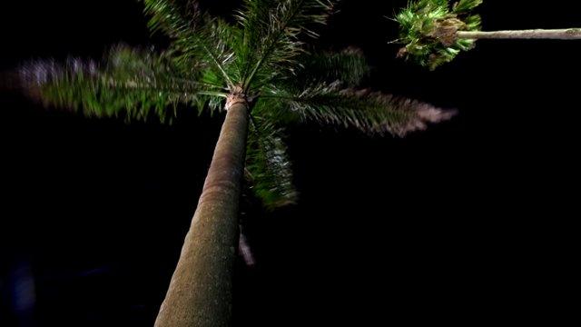 미야자키, 야자나무, 야간