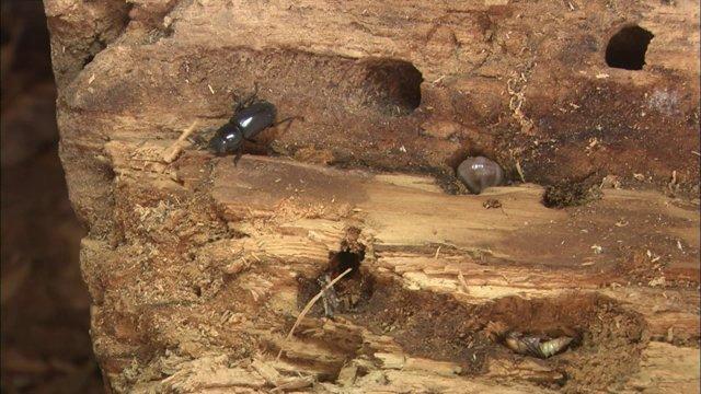 참나무 위 왕사슴벌레