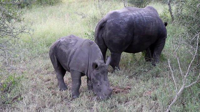코뿔소, 사파리