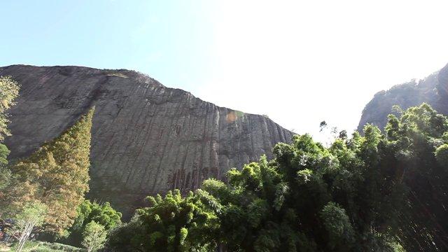 무이산, 나무2