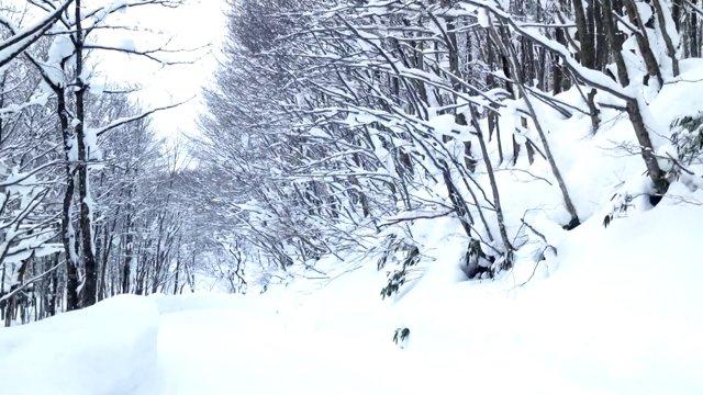 [일본] 아키타의 우유빛 온천수, 츠루노유 온천