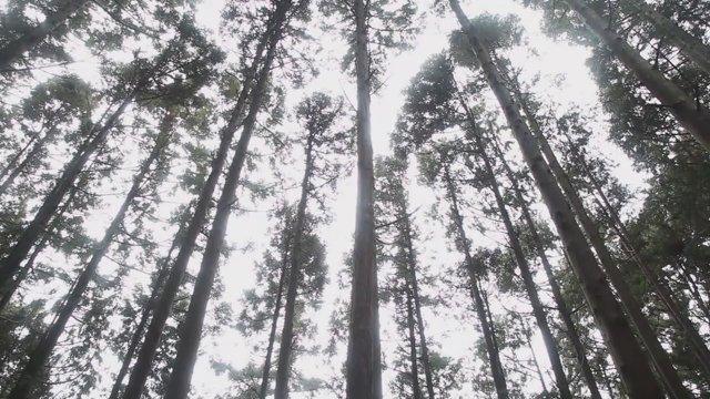 오사카 곤고산 나무02