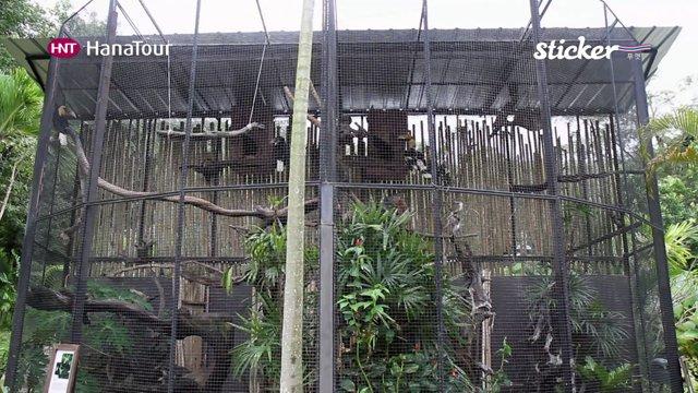 [태국] 푸껫의 다양한 체험, 어트랙션 즐기기