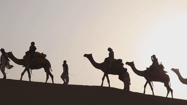 인도 사막의 낙타3