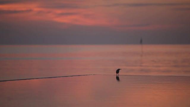 몰디브 노을과 새